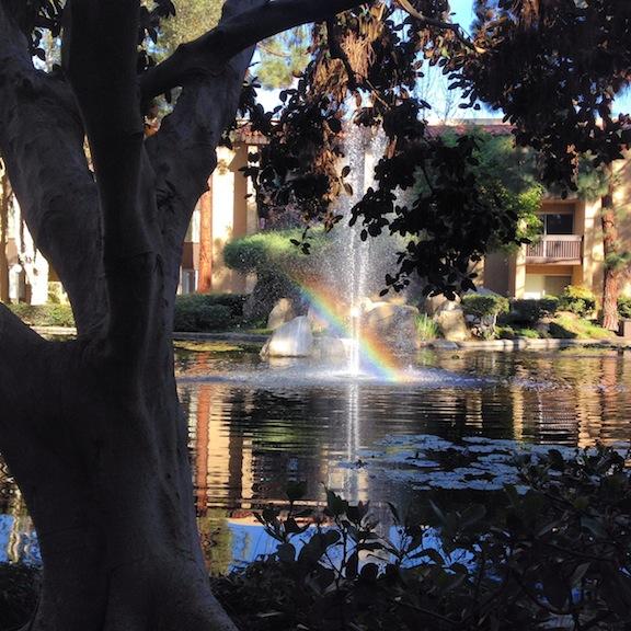 Pond at my Condo, San Diego